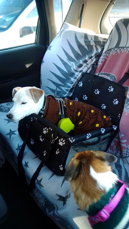Seggiolino auto per cani photo review